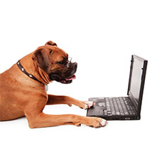 Licence your cat or dog online.