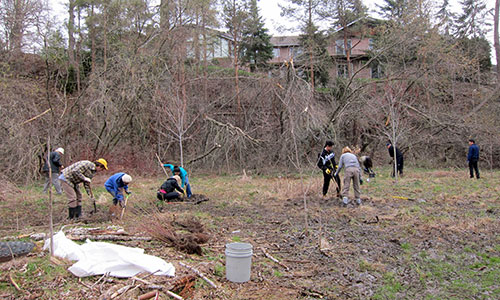 Pomona Mills Park Conservationists Inc. Community Alcove Planting